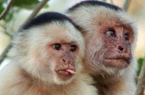 Lenguaje, niños y monos