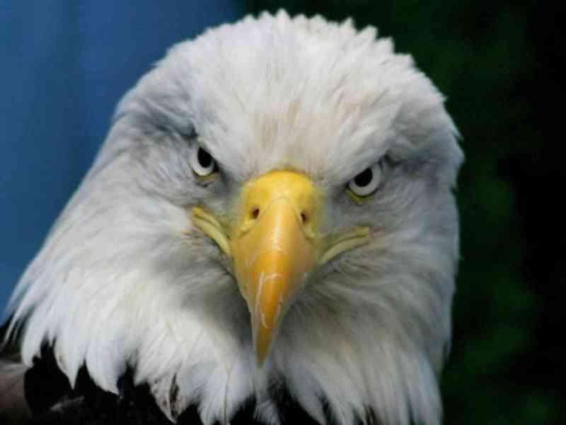 Un águila ataca a una senderista para llevarse a su perra