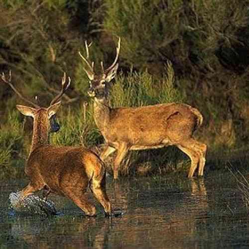 Graban a político manteniendo relaciones sexuales en el bosque