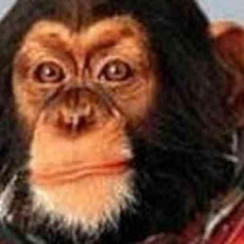 Los rusos planean mandar un mono a Marte