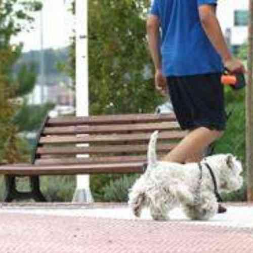 Proponen analizar el ADN de los excrementos de los perros en la calle