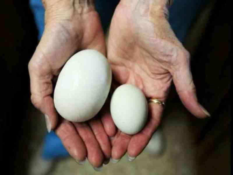 Un super huevo de 145g que tenía otro dentro en EE.UU