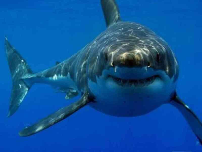 Un hombre perdido en el mar se salva gracias a un tiburón