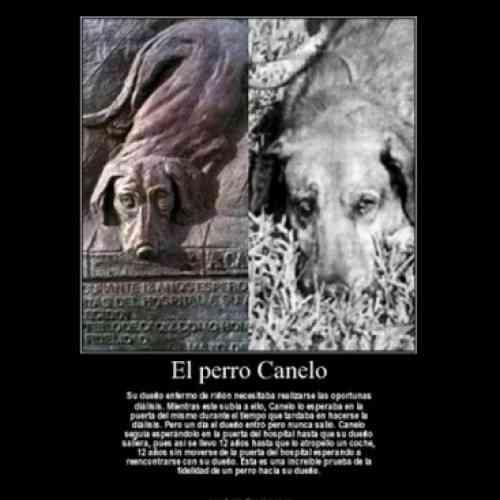 Décimo aniversario de la muerte de Canelo, el perro que esperó 12 años a su amo en la puerta del hospital