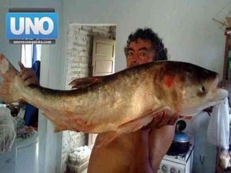 La aparición de un extraño pez en el Paraná alerta a biólogos