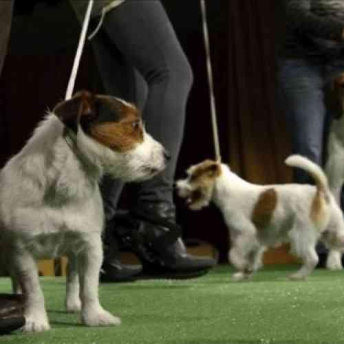 Un canal de televisión para perros, el ultimo grito en ocio canino
