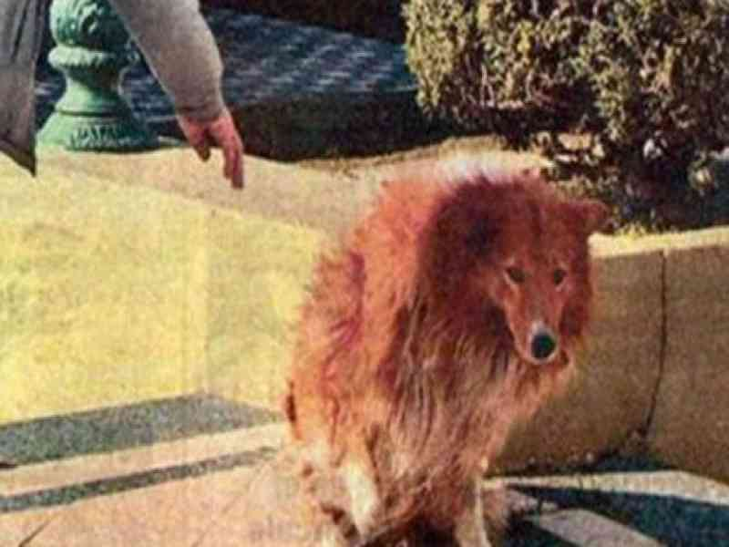 Muere el perro Collie tras nueve años en el cementerio junto a su amo