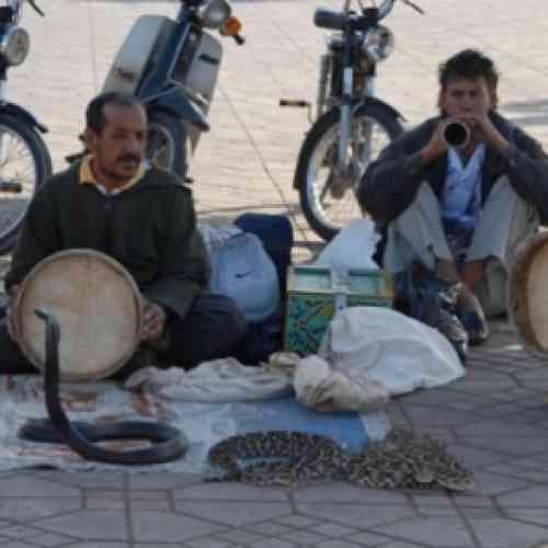 Un encantador muere mordido por su serpiente ante cientos de turistas en Marrakech