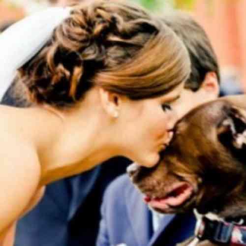 Una mujer quiere casarse con su perro