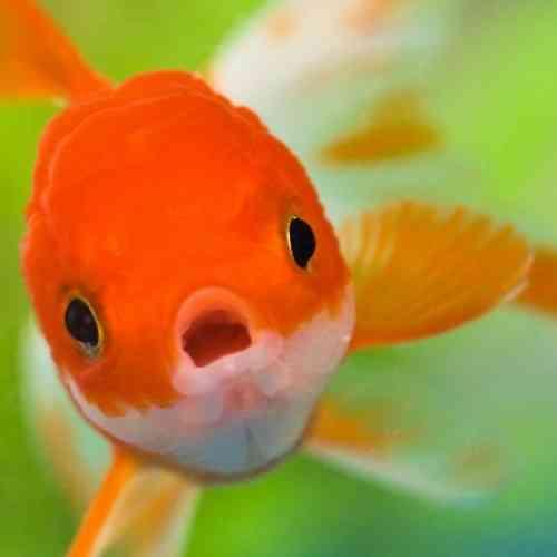 Prohibido tener un pez borracho o morirse en el Parlamento, las leyes más absurdas del mundo
