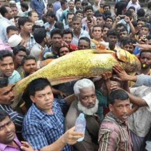 Un pescado dorado de 29.000 euros