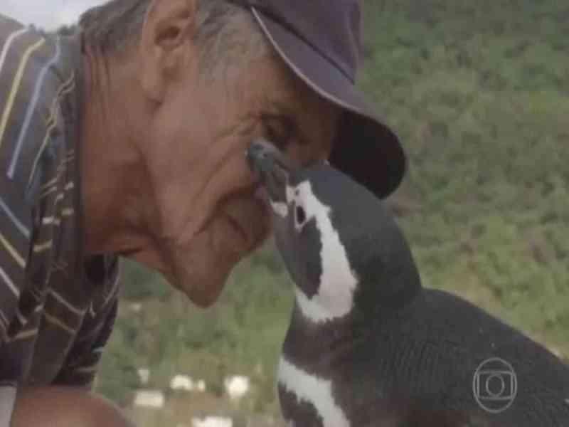 Un pingüino recorre 8000 km cada año para ver al hombre que le salvó la vida